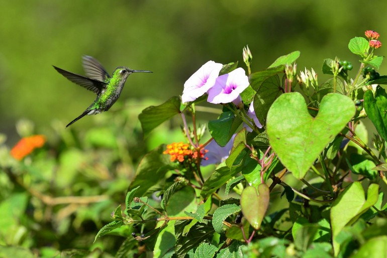 Fauna a flóra na Kubě