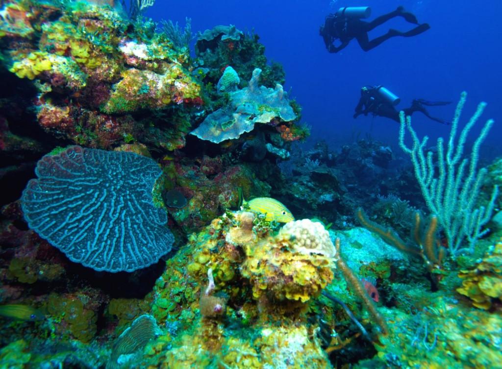 Potápění u ostrova Cayo Largo
