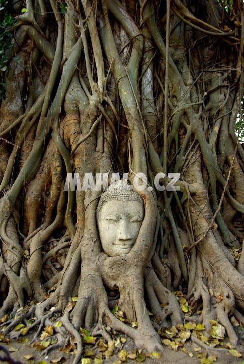Hlava Buddhy v Ayutthaya