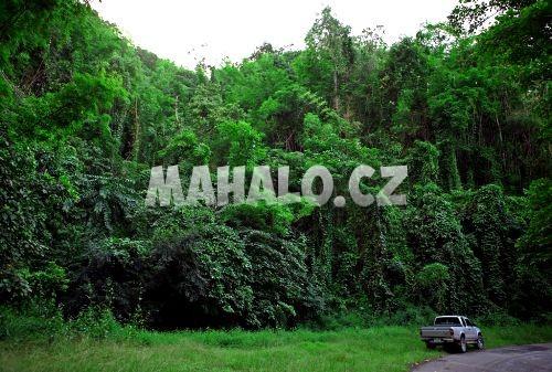 Příroda v Thong Pha Phum
