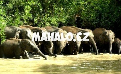Přírodní rezervace Salakpra