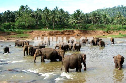 Sloní rezervace kousek od Chiang Mai