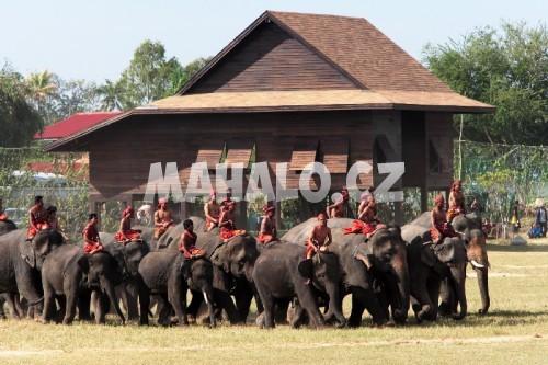 Surinský svátek slonů