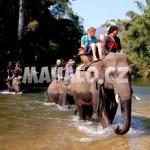 Um Phang - jízda na slonech