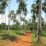 Vnitrozemí ostrova Koh Maak