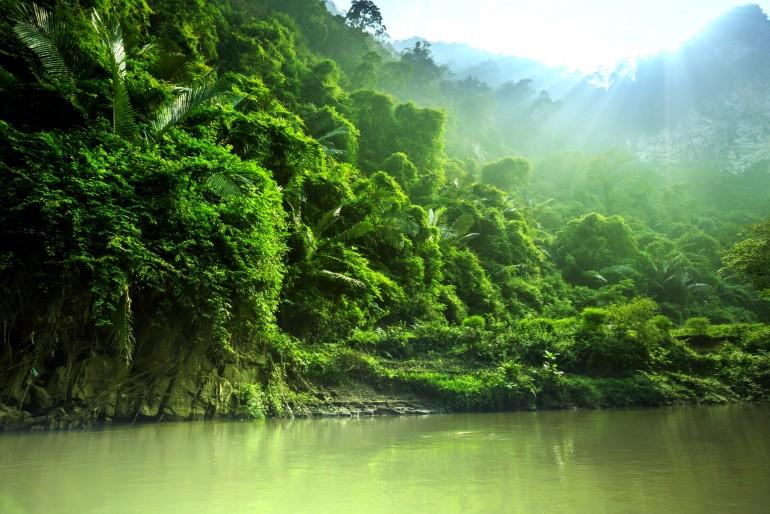 Fauna a flóra Vietnamu