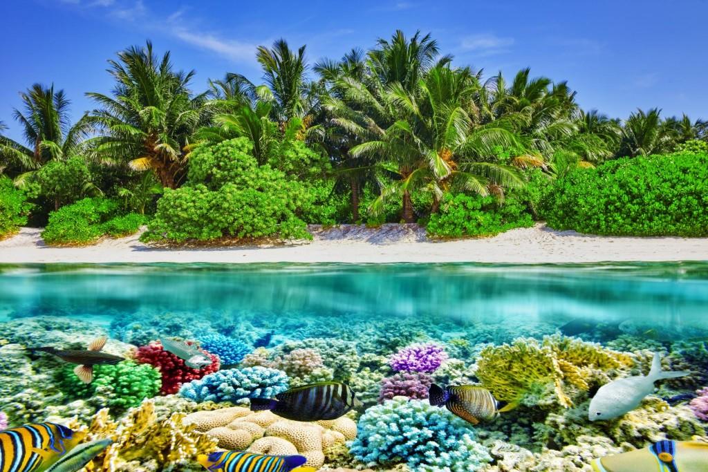 Fauna a flora Malediv je velice bohatá