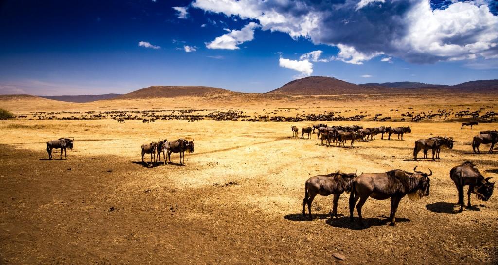 Kráter Ngorongoro překypuje životem