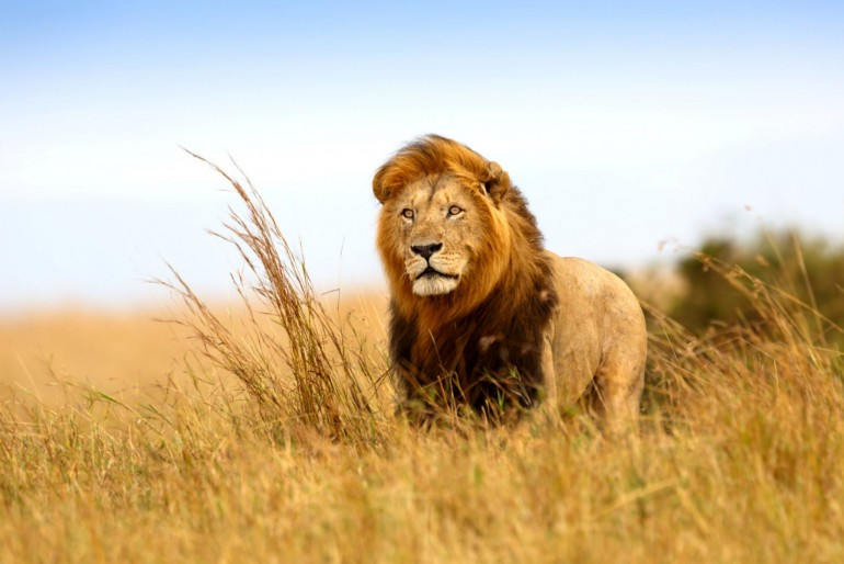 Fauna a flóra v Keni