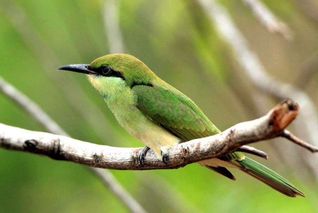 Národní park Bundala