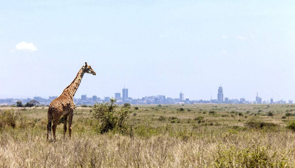 Národní park Nairobi v Keni