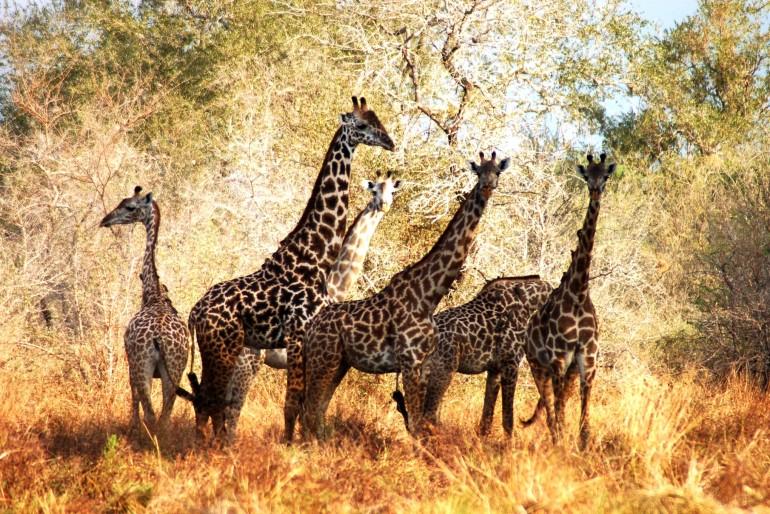 Dovolená v Tanzánii