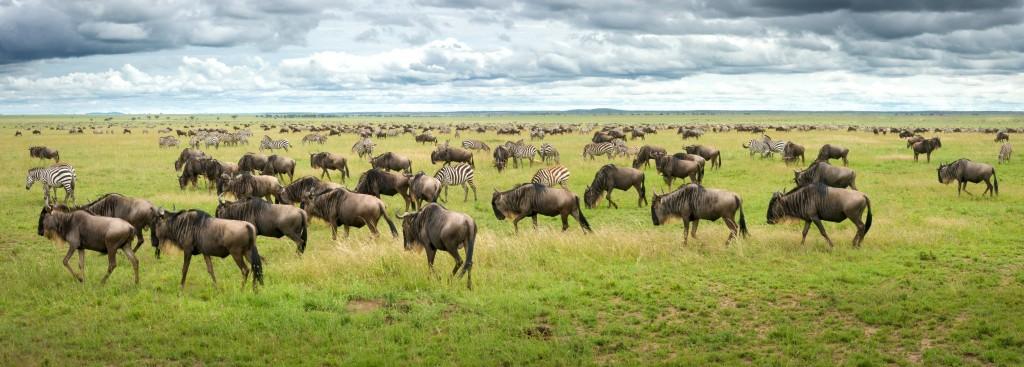 Národní park Serengeti a jeho nekonečné pláně