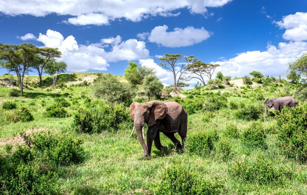 Národní park Tarangire