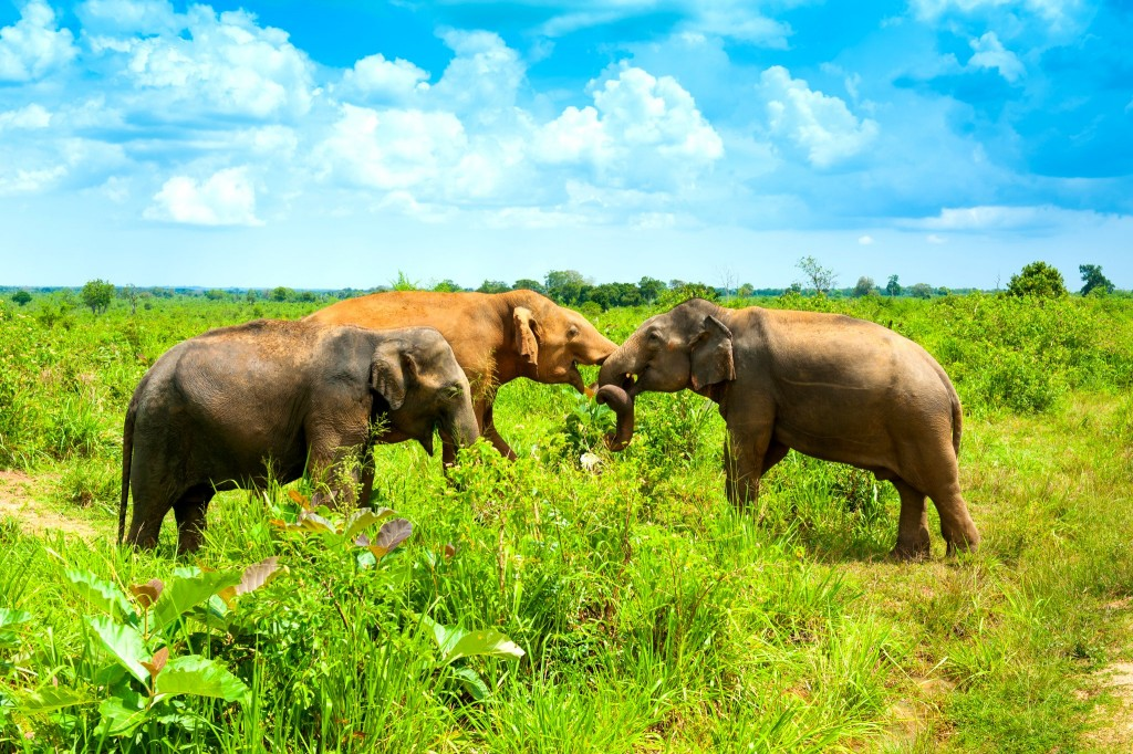 Národní park Uda Walawe - stádo slonů