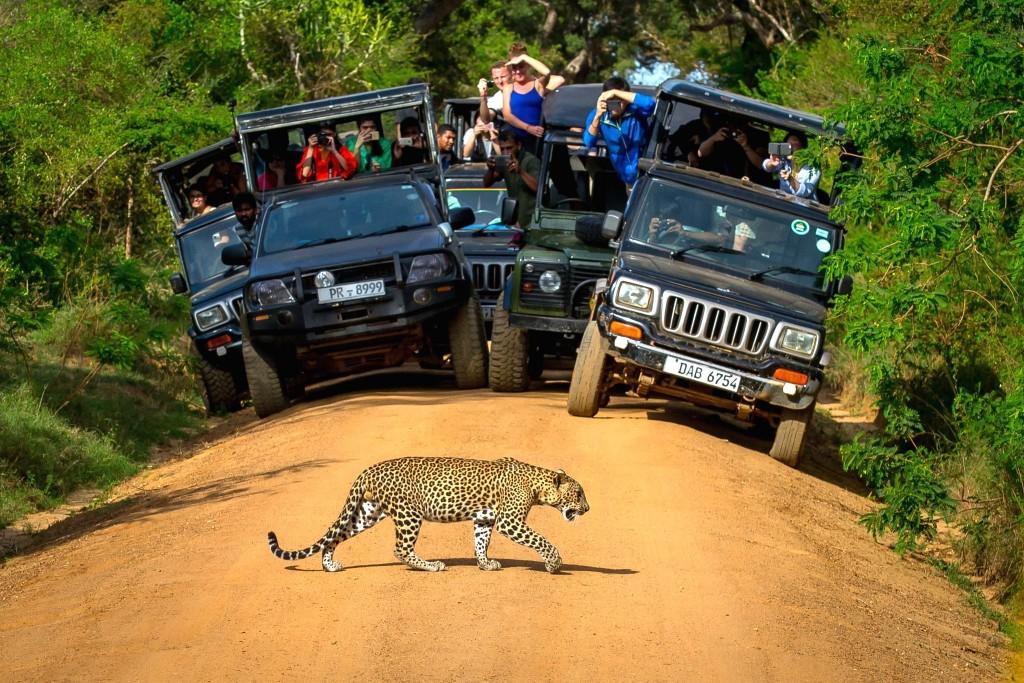 Národní park Yala - v obklíčení turistů