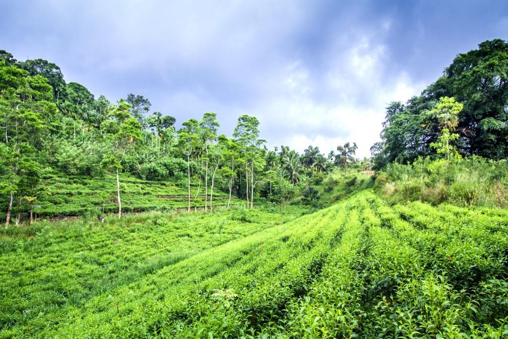 Přírodní rezervace Sinharádža (Sinharaja)