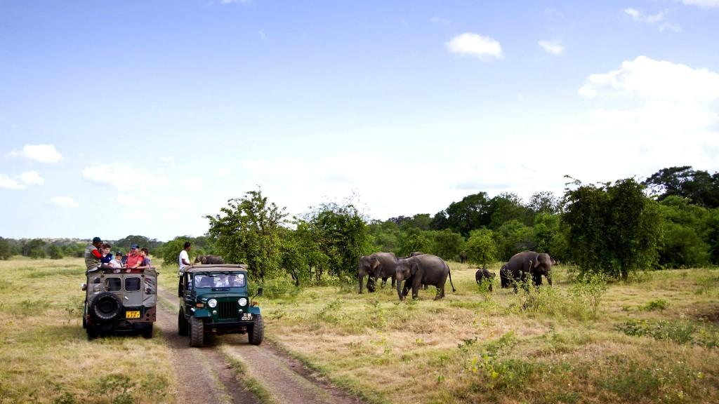 Safari v národním parku Minneriya