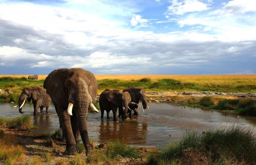 Sloni v národním parku Masai Mara