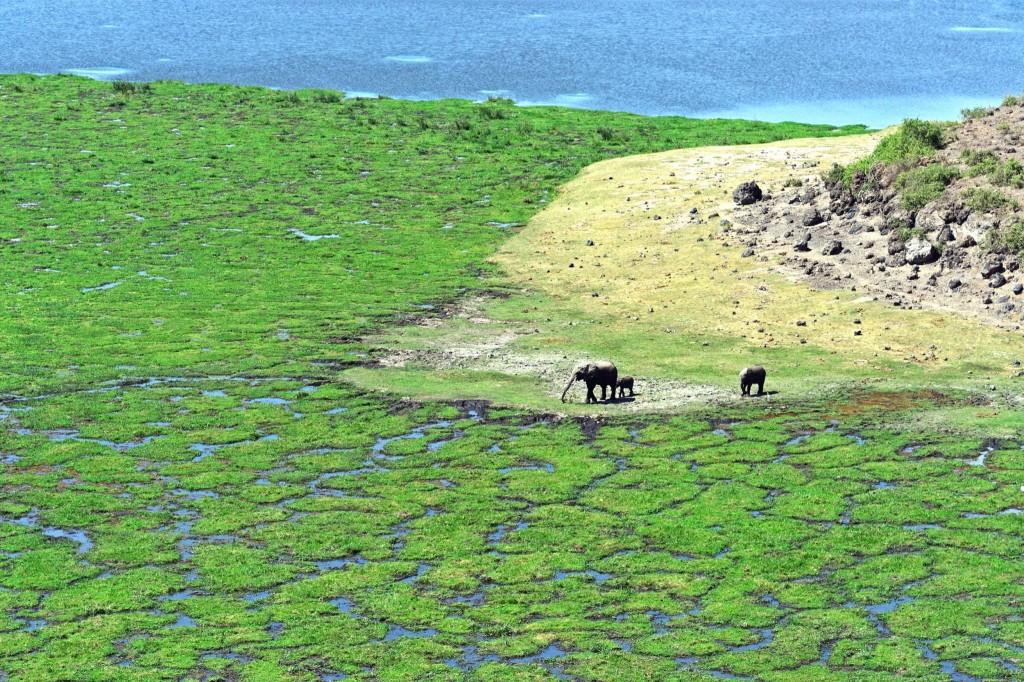 U jezera Amboseli