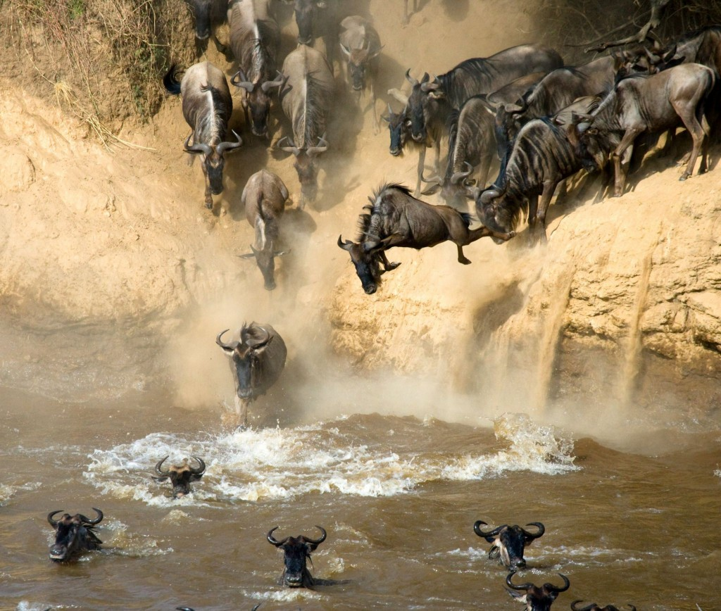 Velká migrace mezi národními parky Masai Mara a Serengeti