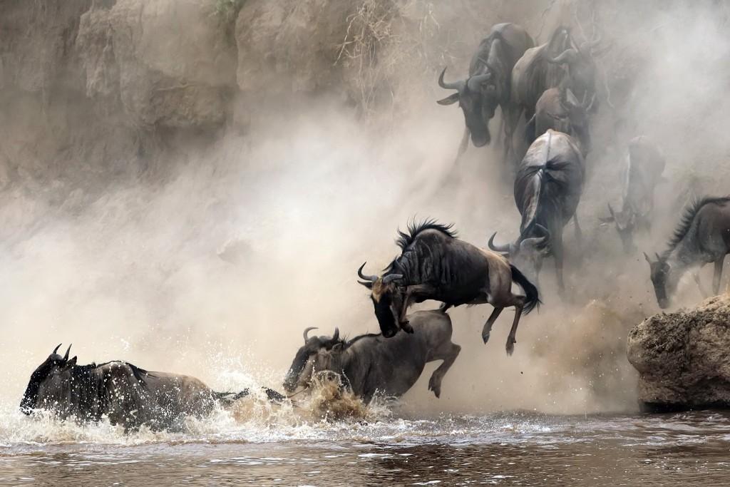 Velká migrace zvířat mezi Národním parkem Serengeti a Masai Mara