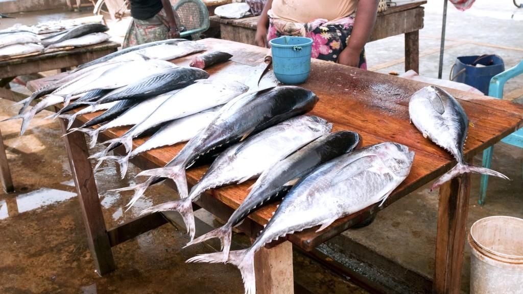 Známý rybí trh v Negombu
