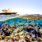Korálový útes v letovisku Safaga