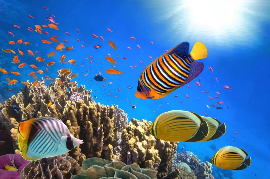 Potápění a šnorchlování v Sharm El Sheikh je úžasné