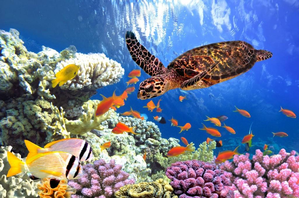 Potápění u korálového útesu v Marsa Alam
