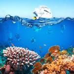 Rudé moře je neskutečně bohaté