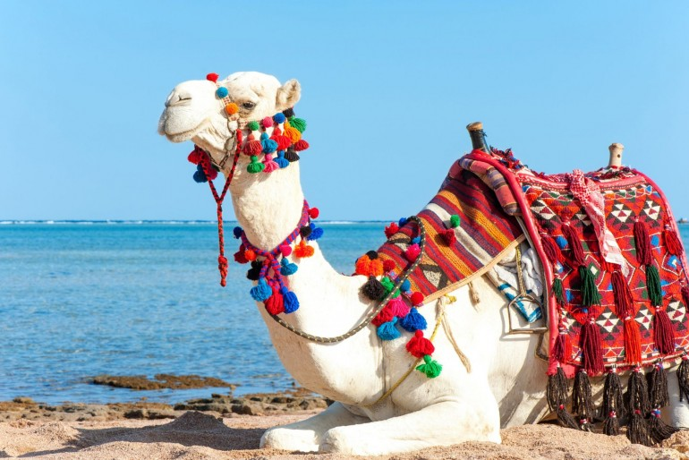 Fauna a flóra Egypta