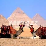 Pyramidy a velbloudi