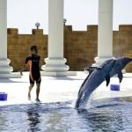 Delfinárium a vodní park Sealanya