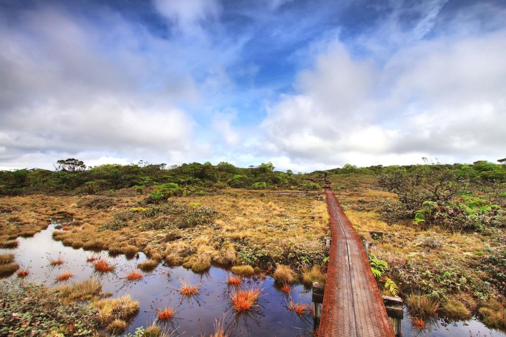 Alaka'i Swamp Trail