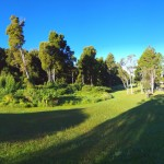 Koke'e State Park - Kanaloahuluhulu Meadow