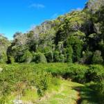 Kousek od začátku Nu'alolo Trailu