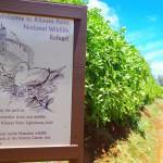 Naučný chodník v Kilauea Point National Wildlife Refuge