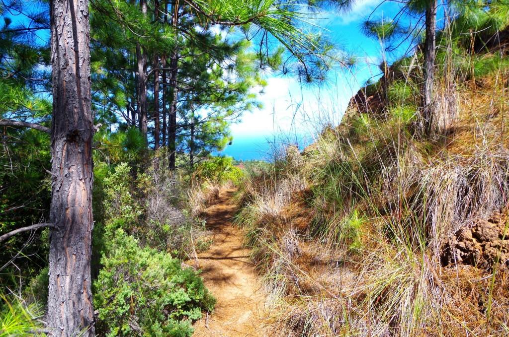 Nu'alolo Trail