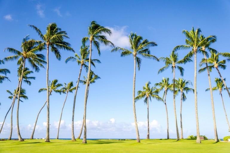 Palmy v Poipu