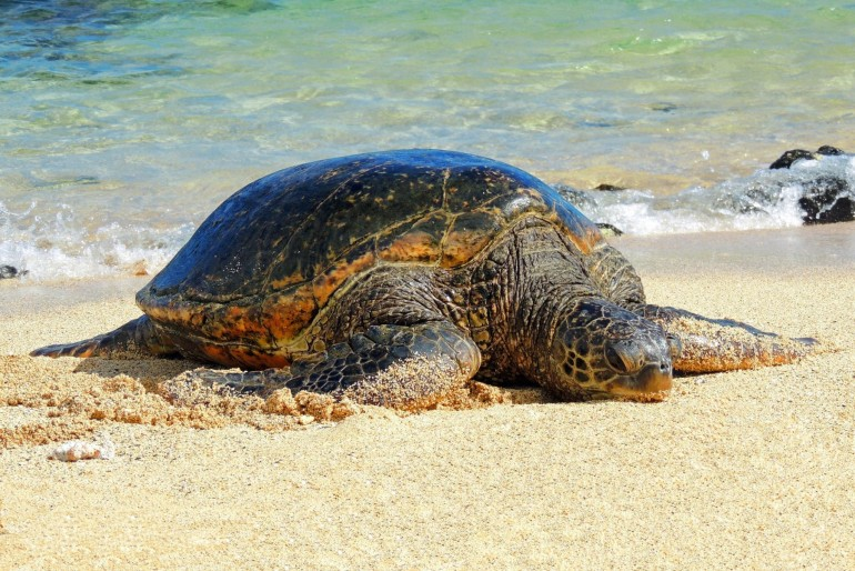 Fauna a flóra Havajských ostrovů