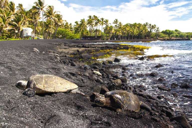 Punaluʻu Beach – Black Sand Beach