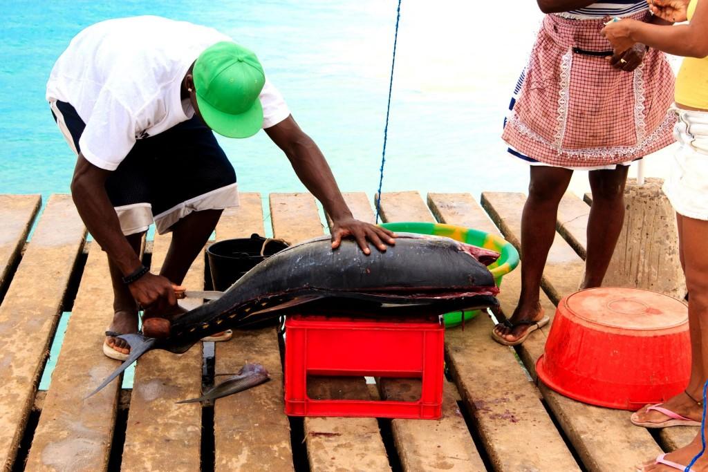 Čerstvě ulovená ryba na ostrově Sal