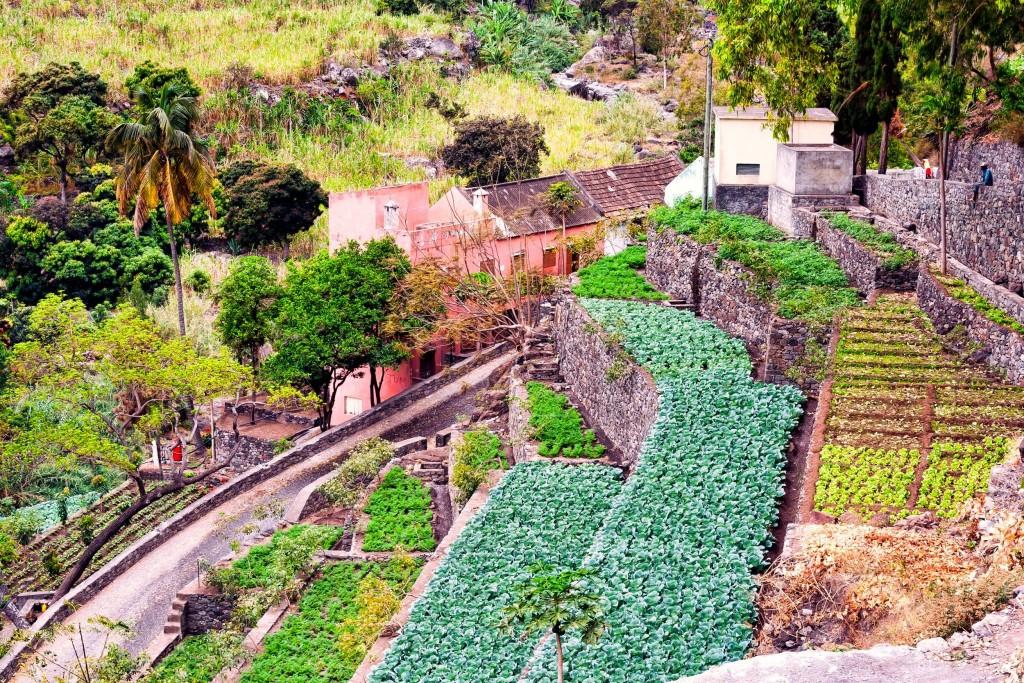 Farma na Sao Antao