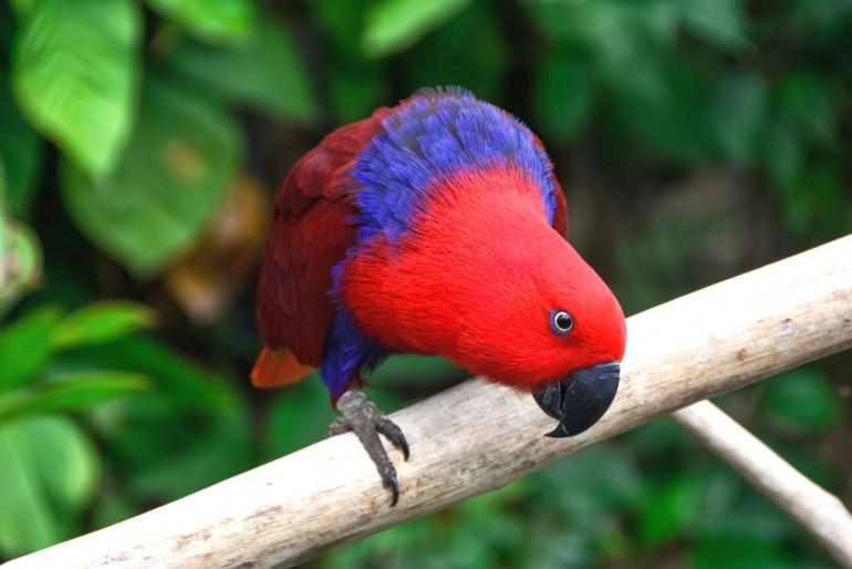 Národní park Abaco National Park Parrot Preserve
