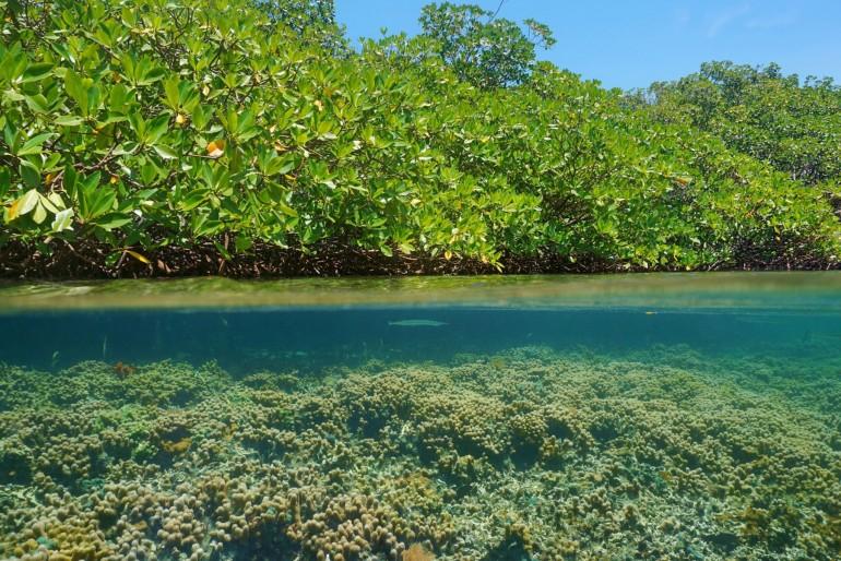 Národní park Black Sound Cay National Reserve