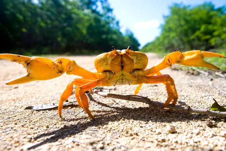 Národní park Crab Replenishment Reserve