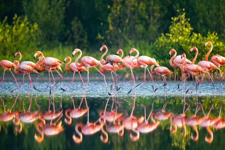 Národní park Inagua National Park