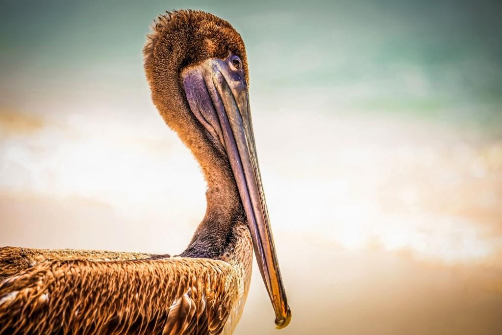 Národní park Pelican Cays Land & Sea Park