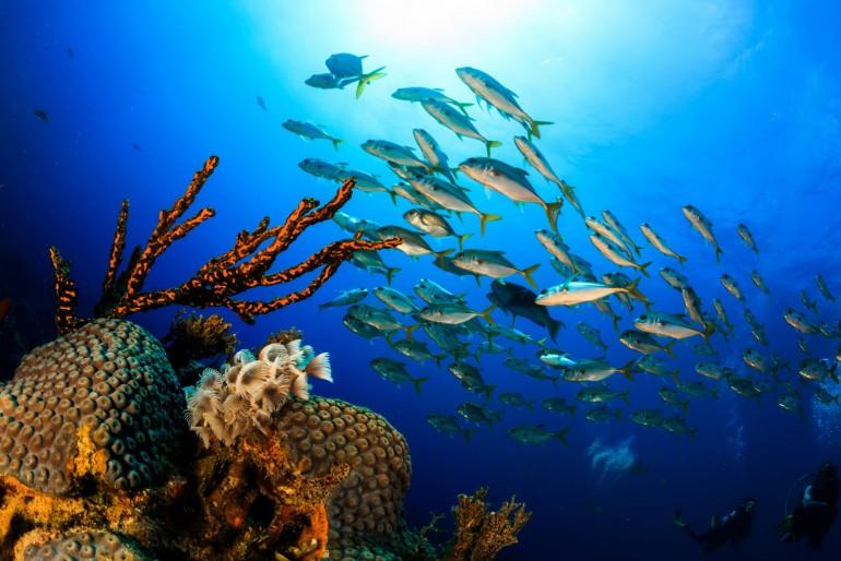 Fauna a flóra Baham